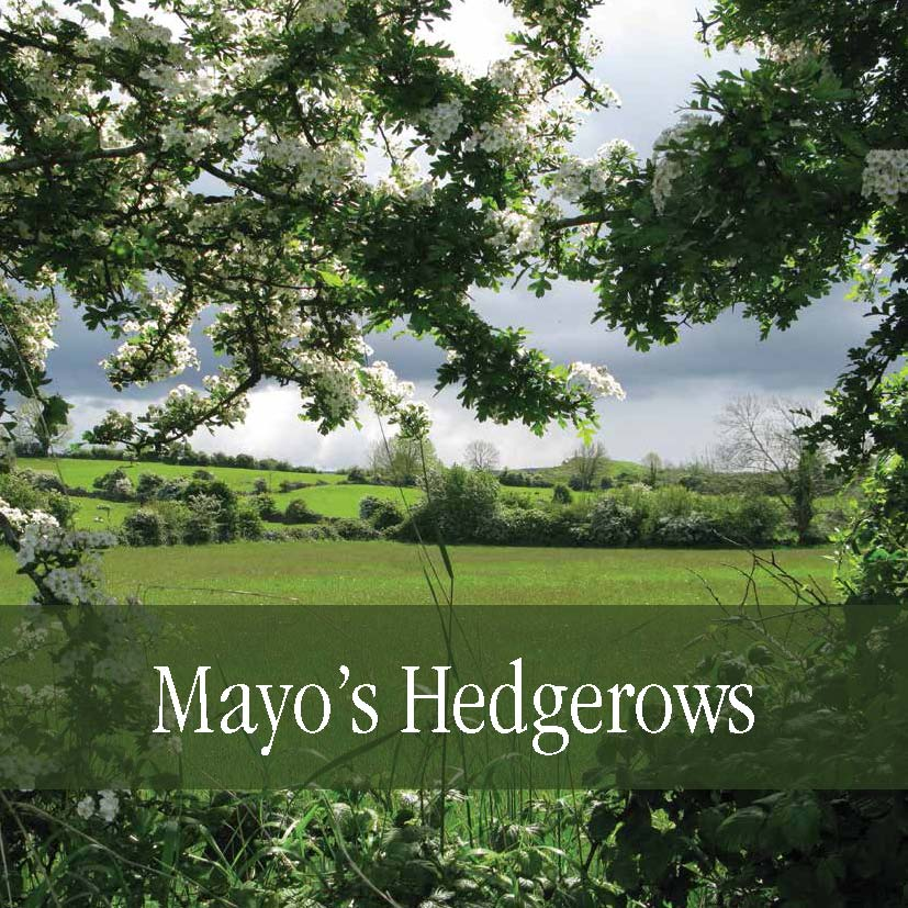 Mayo-Hedgerows-Book-Cover.jpg